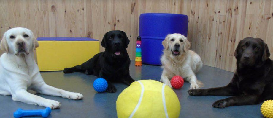 Actividad Asistida Con Perros En El Aula Alternativa